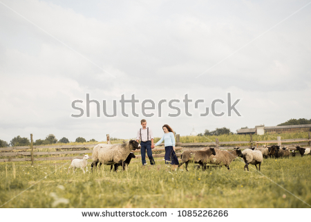 Couple of shepherds depasture sheep #1085226266