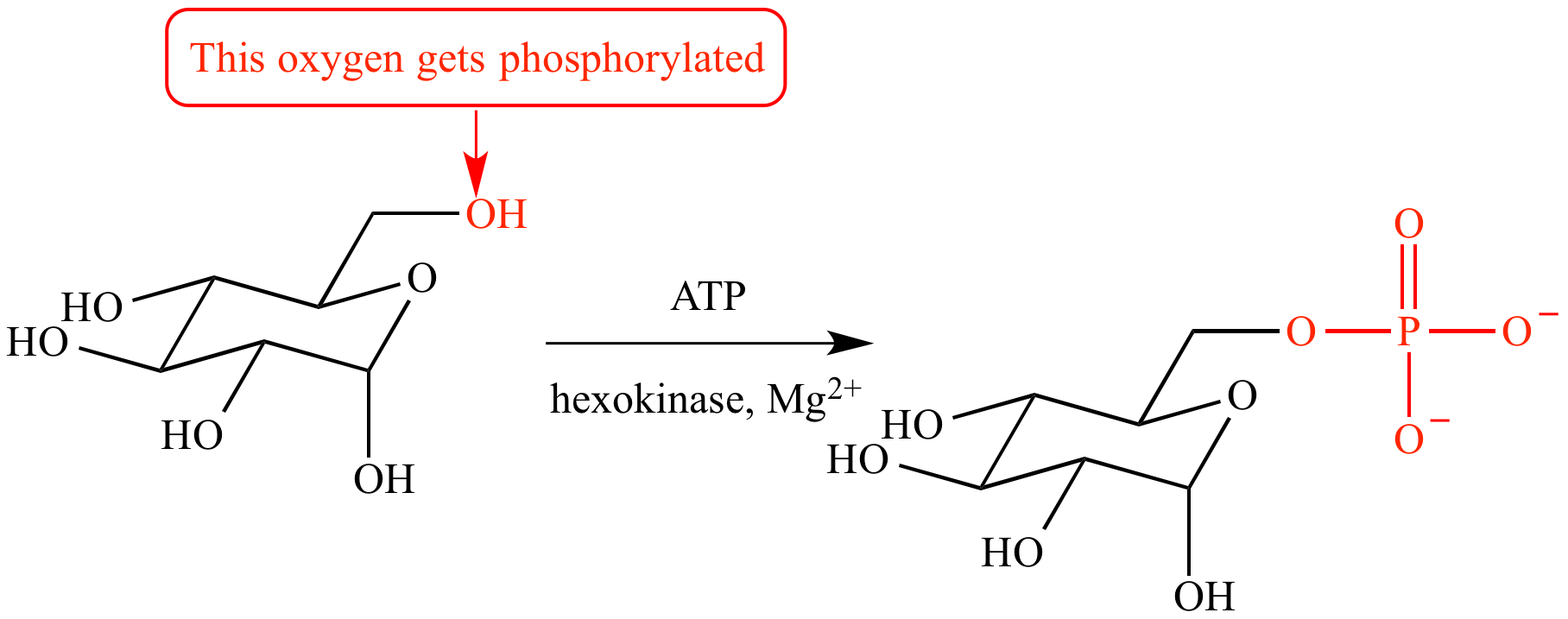 In the first step of glycolysis, the carbon-6 hydroxyl group of glucose is  converted from an alcohol to a phosphate ester (i.e., it is phosphorylated).