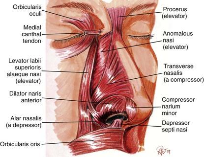 depressor muscle of septum