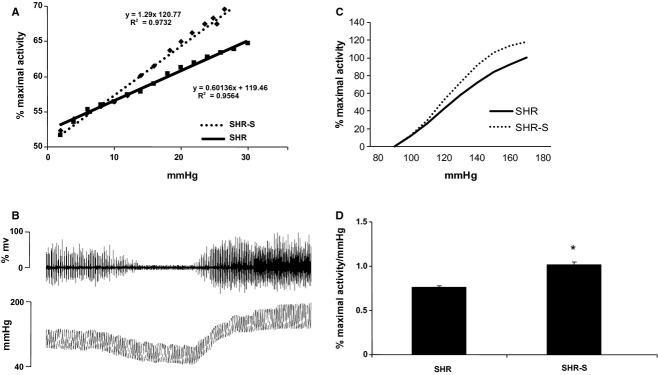 Baroreflex function and sensitivity. (A) Spontaneous aortic depressor nerve  activity, expressed by
