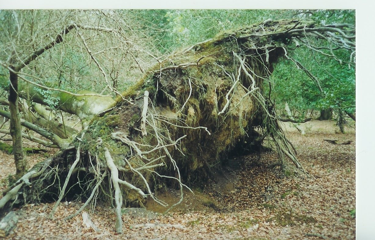 deracinate-To pull out by the roots; uproot. Traveller Location The cataclysmic  effects of climate change may deracinate a culture of its values.