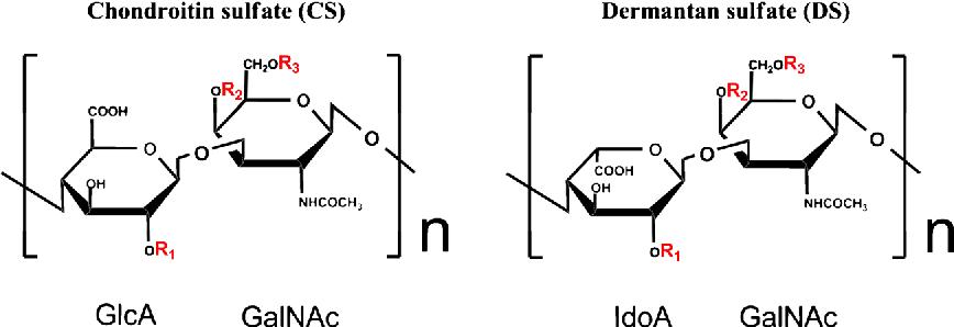 Chondroitin sulfate/dermatan sulfate sulfatases from mammals and bacteria -  Semantic Scholar