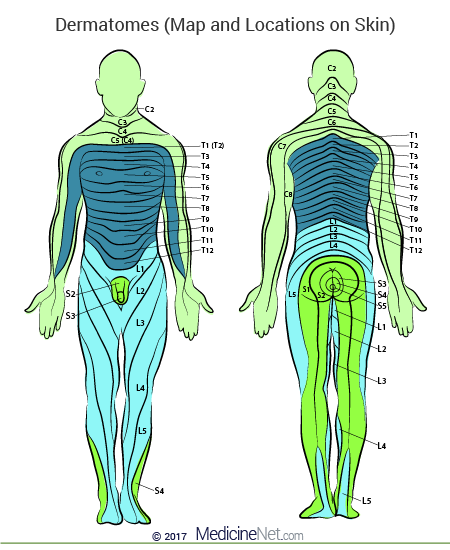 Skin Dermatome Map of the Human Body