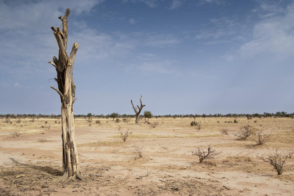 Gradual desertification in Africa is having a far-reaching impact on human  health, food