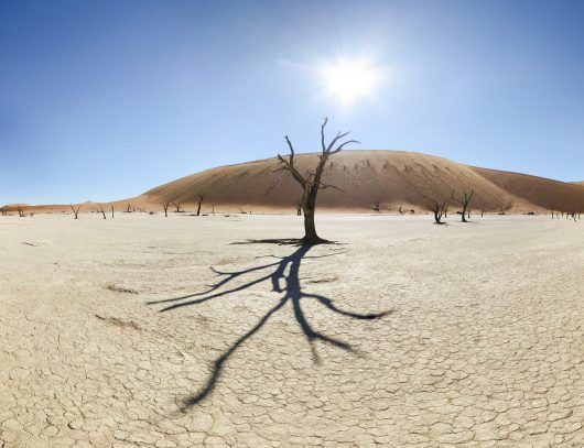 5 Ways on How to Stop Desertification