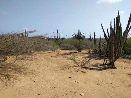 Aruba is desert like. Hooiberg is full of cactuses.
