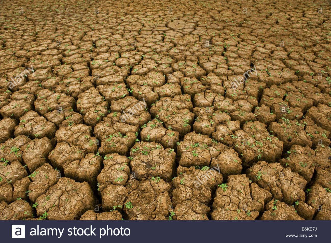 dry season seasoning seasoned weather drain run dry dehydrate dehydrating  dehydrated shrivel shrivelling desiccate - Stock