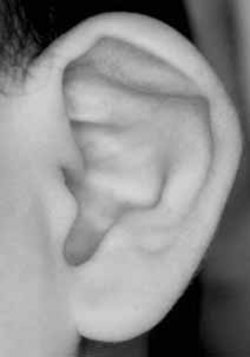 Shell Ear. Definition: Thumbnail