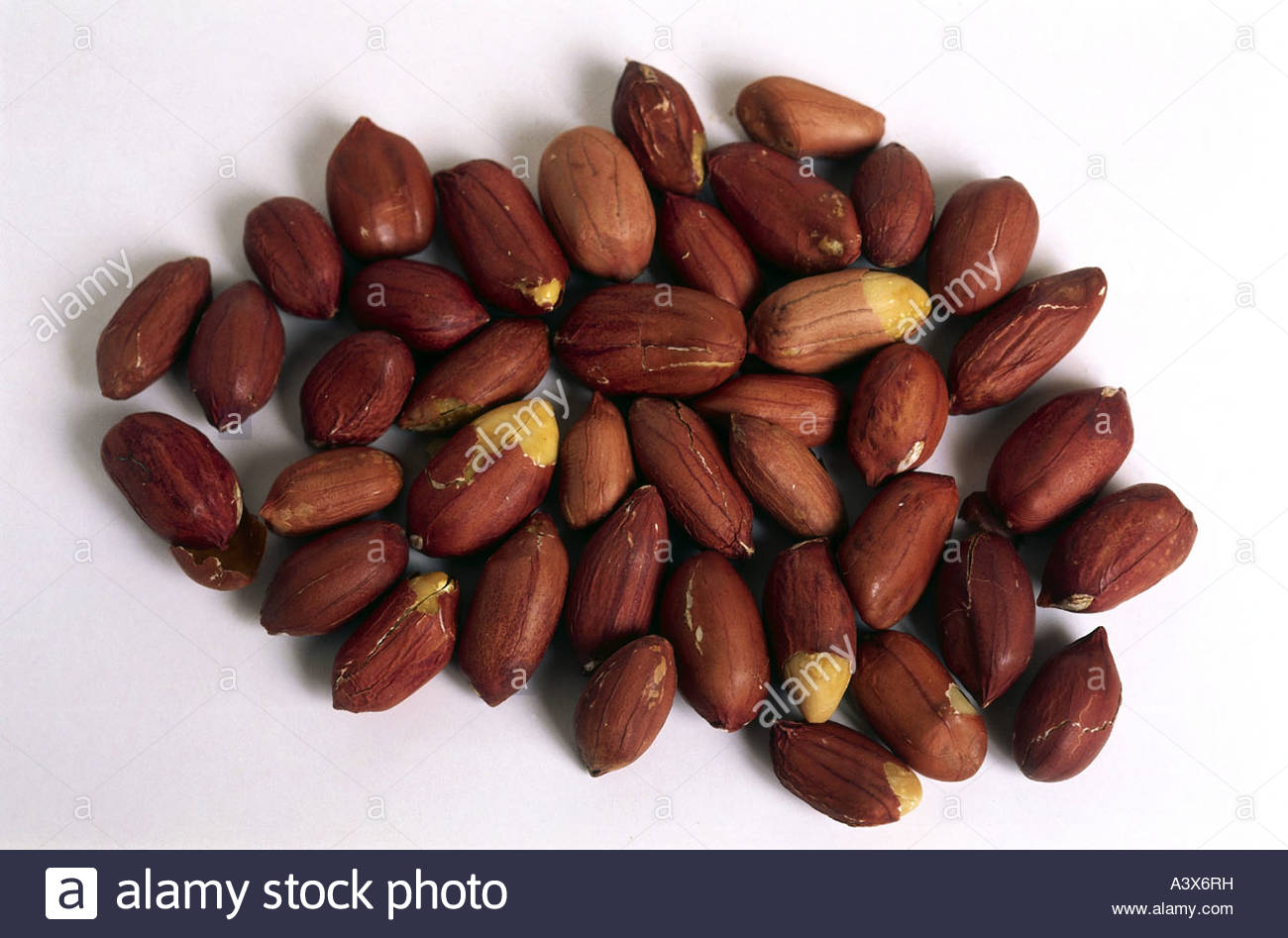 earthnut