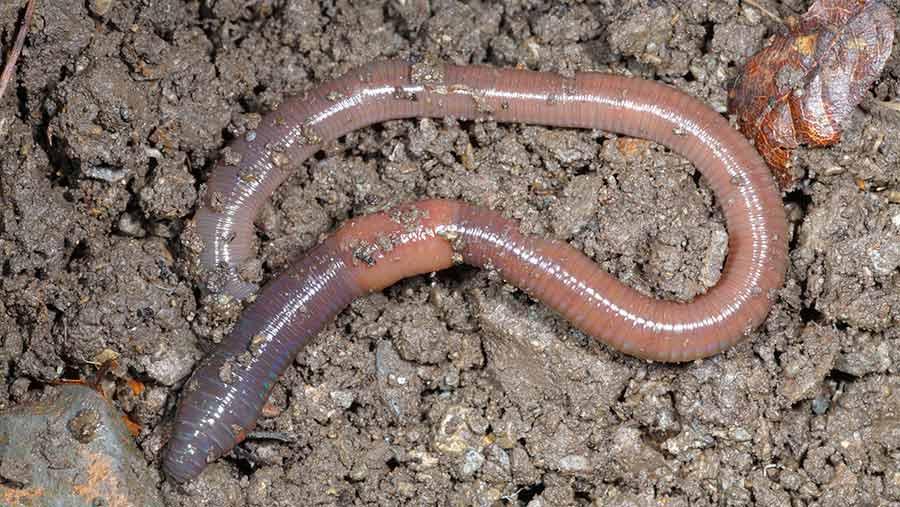 Earthworm benefits