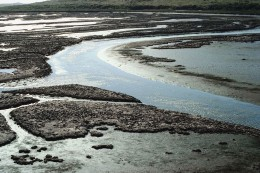 Photograph of mud flats.