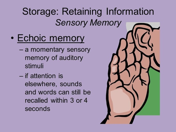Sustained rehearsal that engages thought processes in the frontal cortices  will eventually become stored in long-term memory. This is called learning.