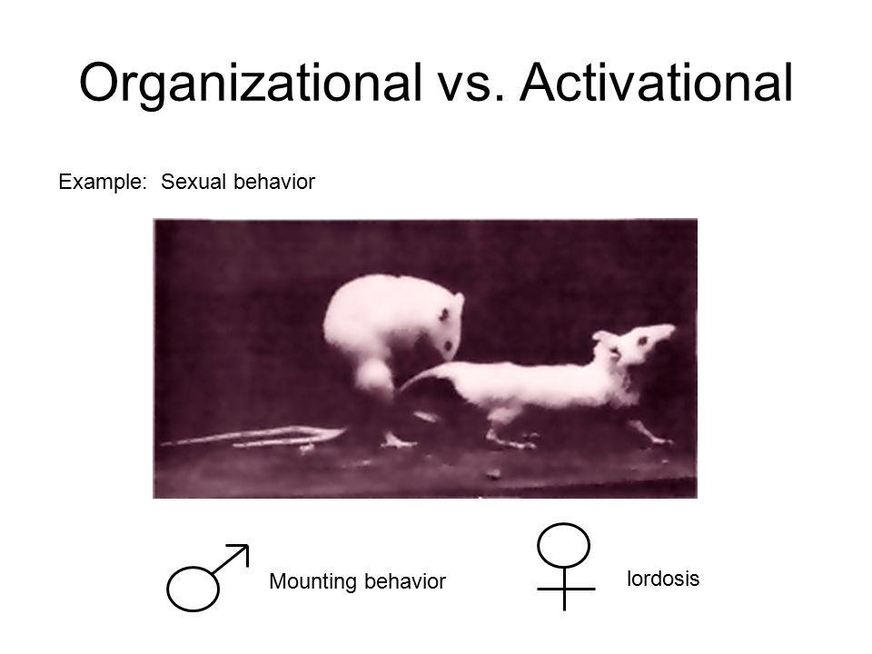5 Organizational vs. Activational Example: Sexual behavior Mounting  behavior lordosis