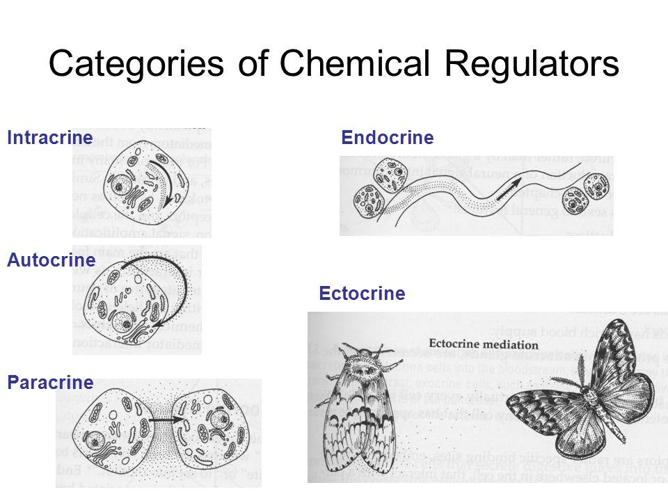 1 Categories of Chemical Regulators Intracrine Autocrine Paracrine  Endocrine Ectocrine