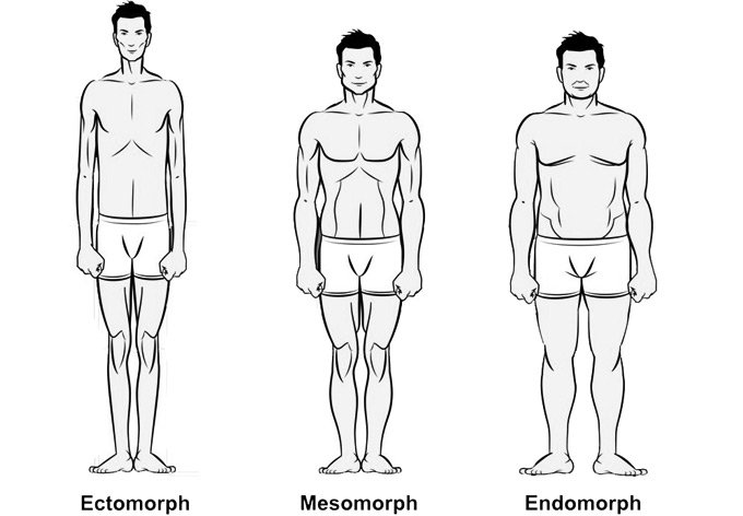 The Three Body Types: Ectomorph, Mesomorph or Endomorph