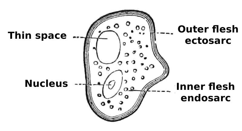 a public domain PNG image