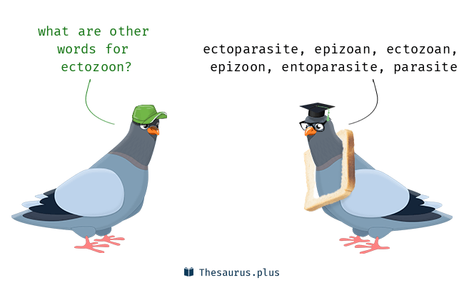 Synonyms for ectozoon