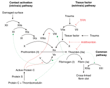 The blood coagulation and Protein C pathway. Factor IX