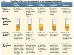 Facultative anaerobic organism oquizletcomirnyRCF0zeBUdyNbVBCOIdgmjpg