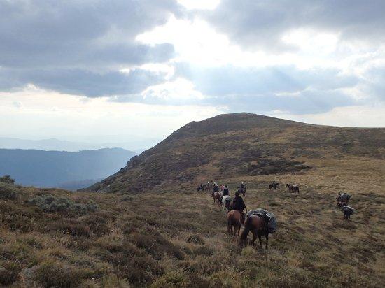 Bogong Horseback Adventures: Approaching Mt Fainter