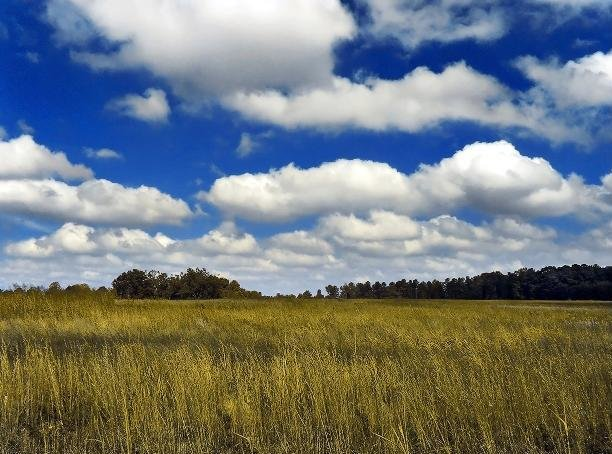 1: Cumulus humilis clouds, also called fair-weather clouds (Young, 2007