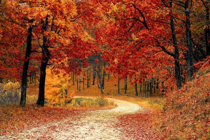 Autumnal Equinox - Fall Road