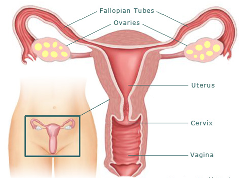 Dr Kola Kayode, a gynaecologist with a private hospital in Abuja, says that  blockage of fallopian tubes is the major cause of infertility in women.
