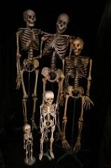 skeleton family 592