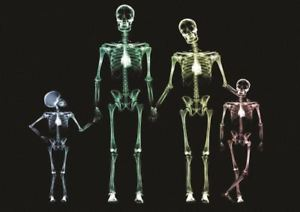 Image is loading X-RAY-FAMILY-SKELETON-A3-ART-PRINT-POSTER-