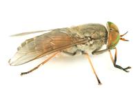 imagen de gadfly