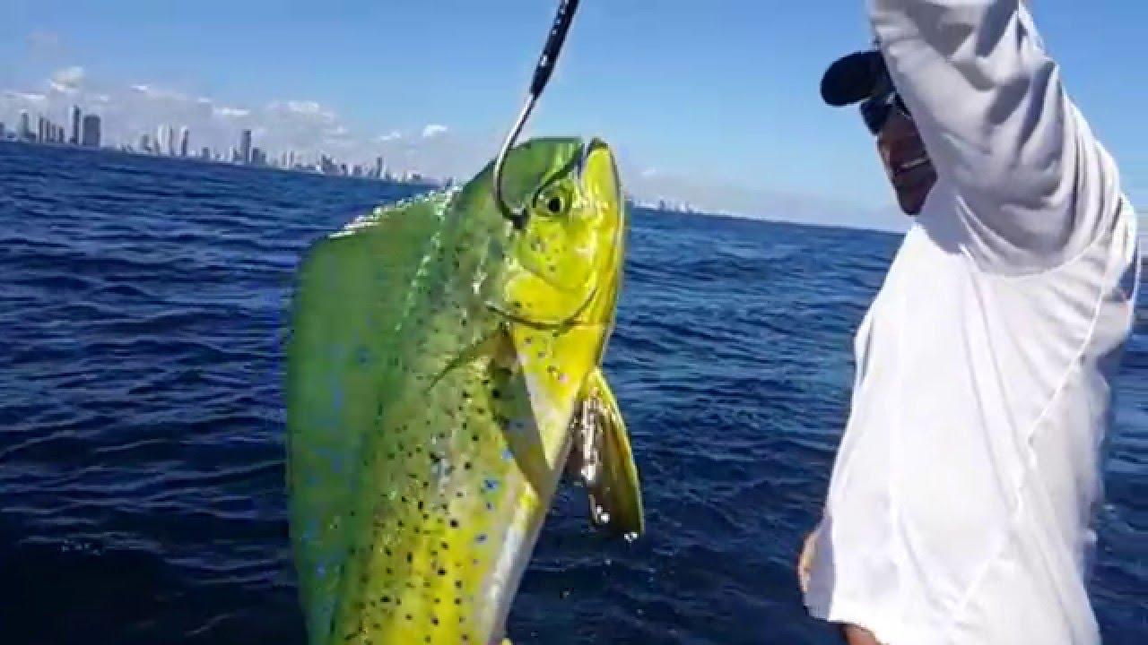 Gaffing a mahi-mahi in slow motion fishing off Miami   Peter Miller Fishing