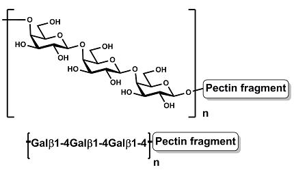Pectic Galactan (Potato)