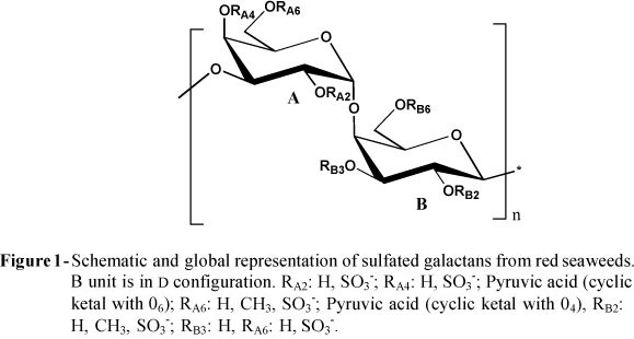 In relation with all these structural features, sulfated galactans from  seaweeds are classified in three classes: agarocolloides, carrageenans and  complex