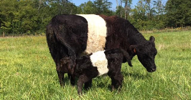 The Great Lakes Belted Galloway Association, Inc.