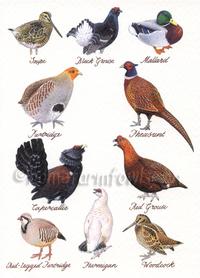 British Game Bird Greeting Card