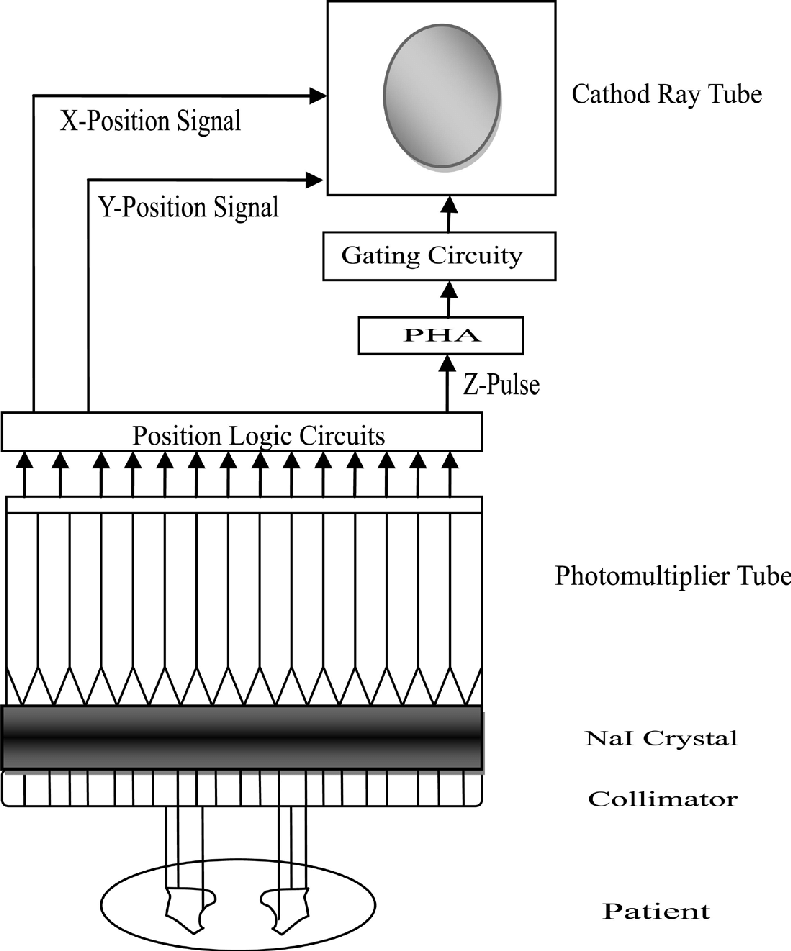 Basic principles and components of the gamma camera.