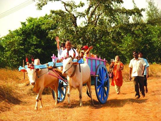 Majhya Mamacha Gaon: Bullock Cart ride