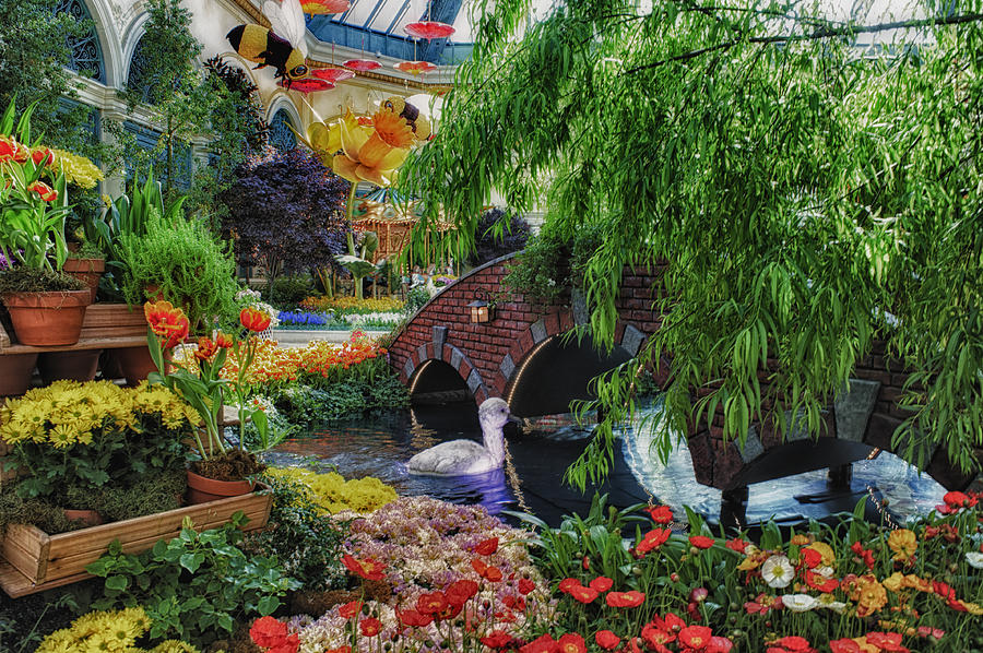 Hdr Photograph - Garden Variety by Stephen Campbell