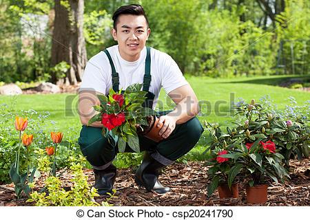 Asian gardener planting flowers - csp20241790