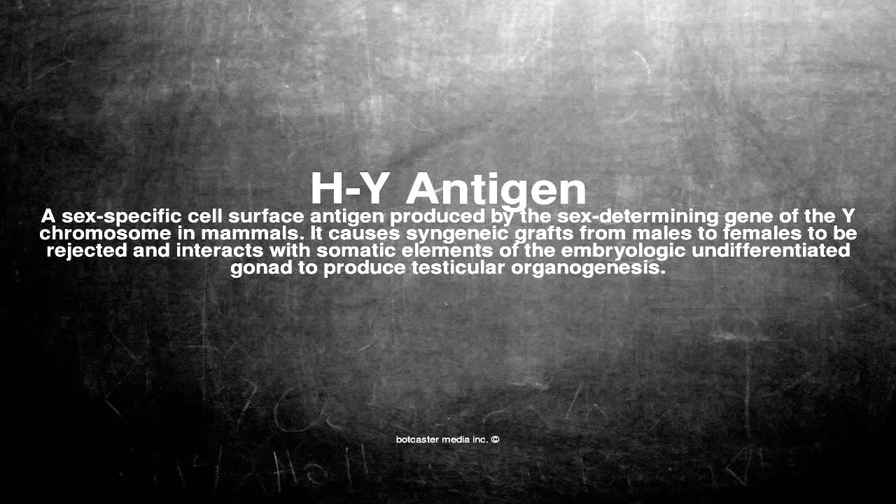 Medical vocabulary: What does H-Y Antigen mean