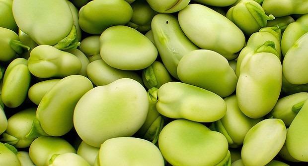 1 kg semilla de haba