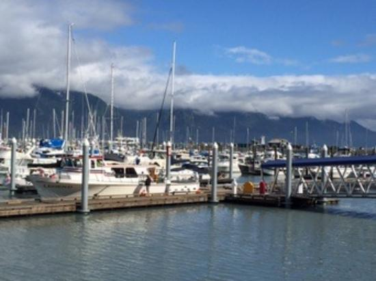 Seward Boat Harbor: The habor