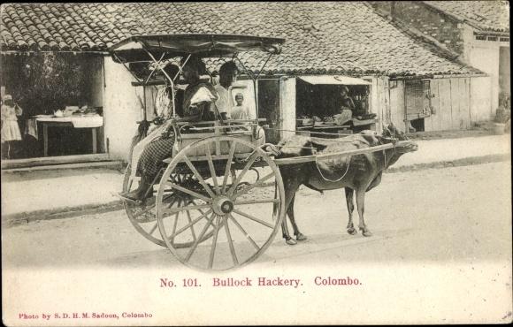 Postcard Colombo Ceylon Sri Lanka, Bullock Hackery