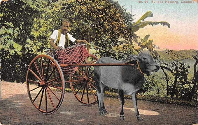 Colombo Ceylon Bullock Hackery Cart Wagon Antique Postcard J65565