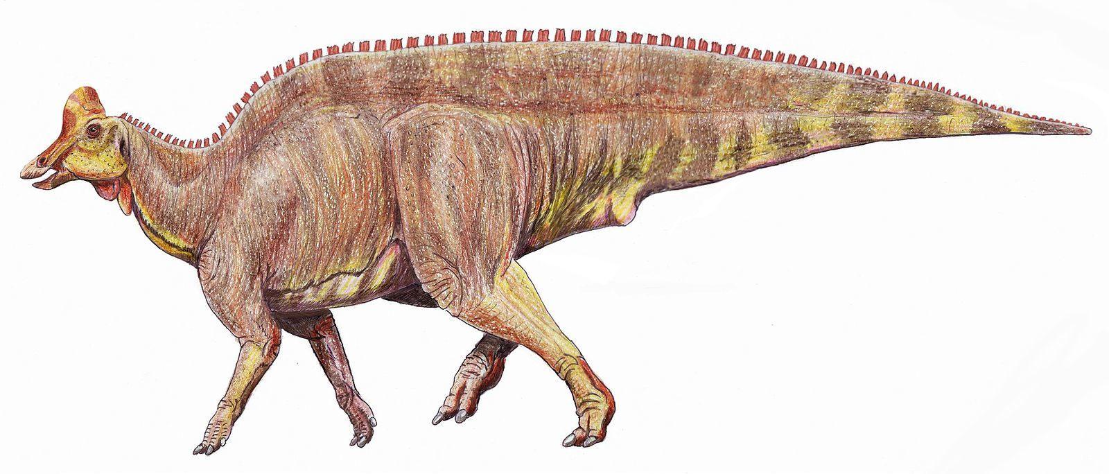 Reconstruction of the Hadrosaur Lambeosaurus. By Dmitry Bogdanov