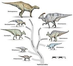 The hadrosaurs