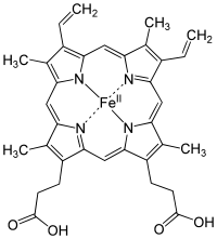 Structure of Fe-porphyrin subunit of heme B.