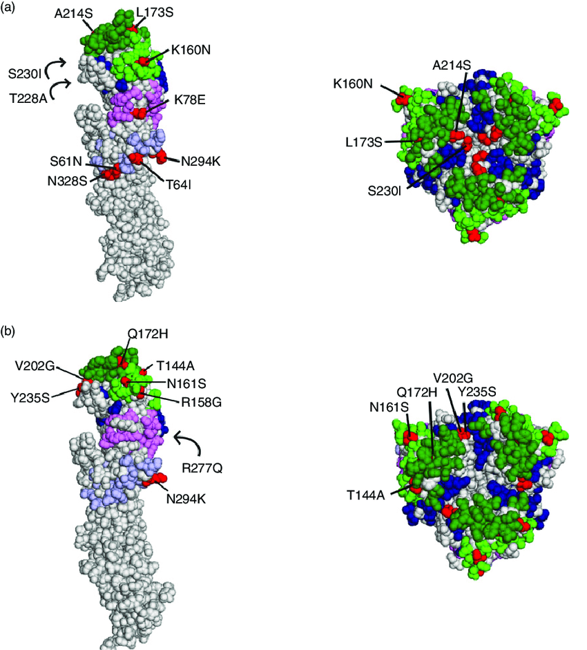 Three-dimensional model of haemagglutinin (HA) antigenic site-related  mutations between circulating viruses, and the viruses used for vaccination.