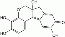 Haematoxylin