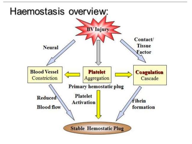 Haemostatic